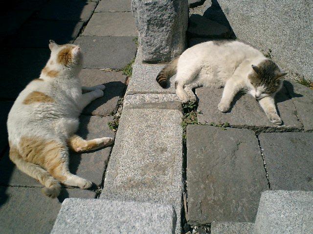 04)鎌倉市材木座「光明寺」今日の二匹は、揃ってつるんで小刻みに場所を変えてゴロンゴロンした。立っている私の影に入ってがゴロンとして、私が移動して立ち止まると私の影に入ってゴロンとした。私が離れたとこ
